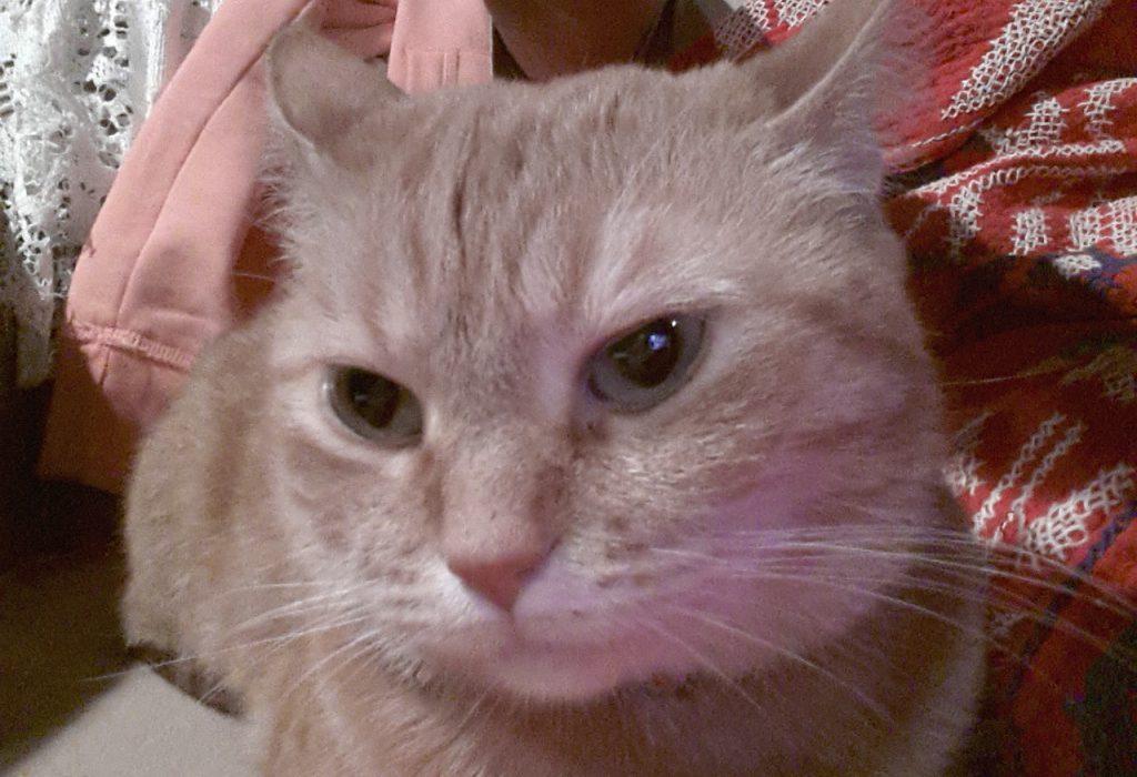 Selfies!!!!!!!!! Cats!!!!!!!